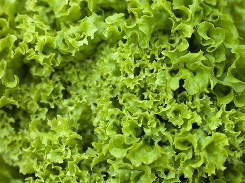 Салат батавия