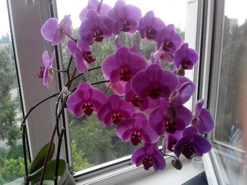 Орхидея. Фото Марины Яблонской