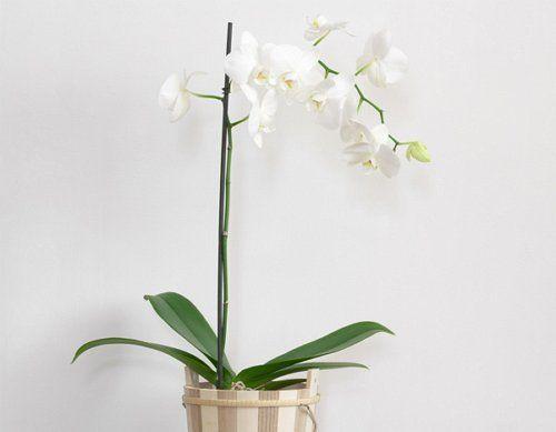 Подпорка для орхидеи