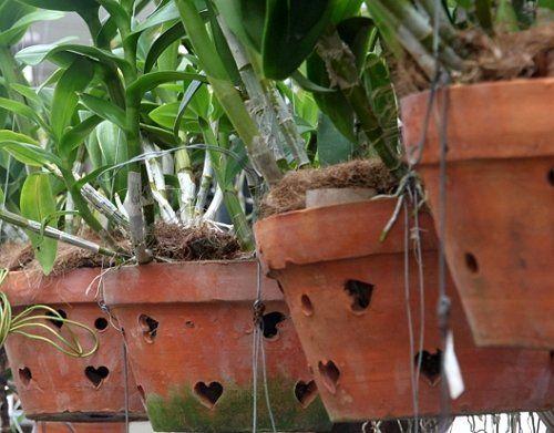 Орхидеи в глиняных горшках