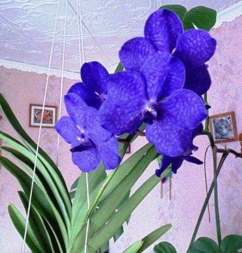 Орхидея. Фото Николая Томканова