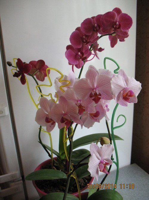 Орхидея. Фото Анастасии Дубининой
