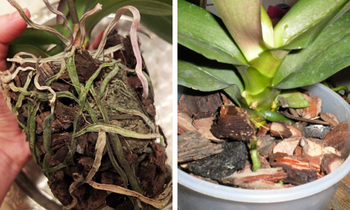 Субстрат при покупке (слева) и субстрат для орхидей (справа)