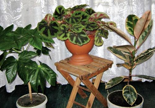 Растения у окна