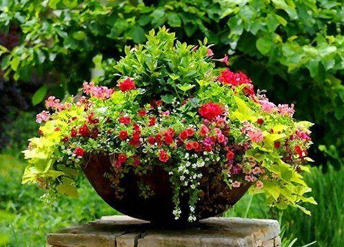 Растения в уличном вазоне