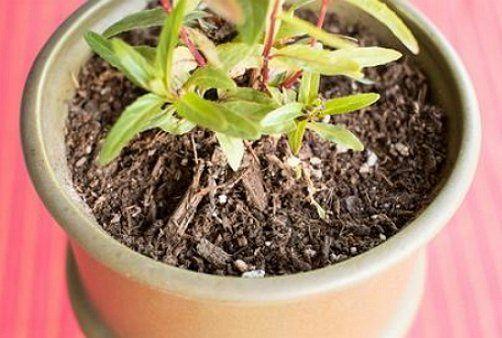 Белые мошки в почве