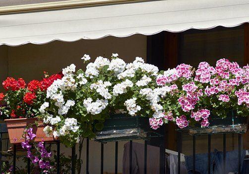 Цветы в контейнерах
