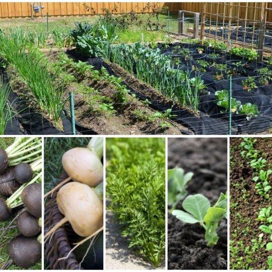 Что можно посеять и посадить в огороде осенью в 2019 году