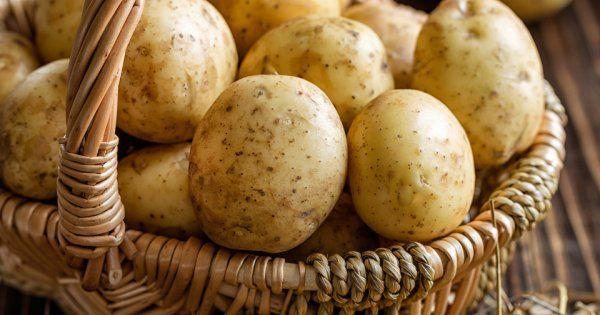 Картофель секреты выращивания большого урожая