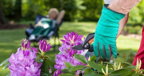Сучкорезы для обрезки деревьев на высоте: садовые телескопические, ручная пила с удлинителем и как сделать секатор своими руками