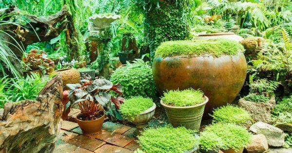 Садик мхов – как создать на участке