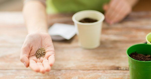 Подготовка семян к посеву: о чем нужно помнить?