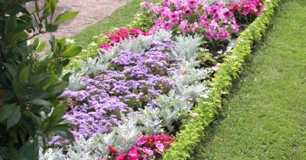 Многолетние цветы низкие   фото и название