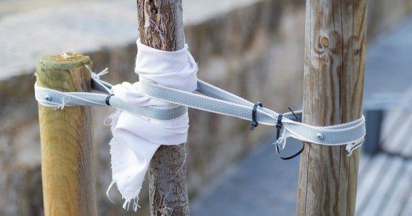 Прививка мостиком спасет поврежденное дерево