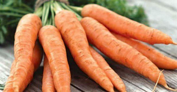 Список скороспелых сортов моркови