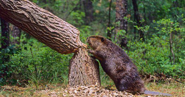 Как срубить дерево – подробная инструкция