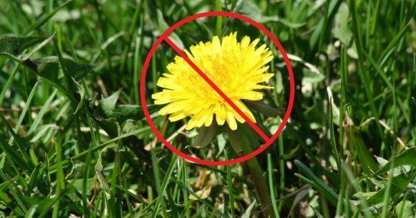 Чем укрыть землю чтобы не росли сорняки