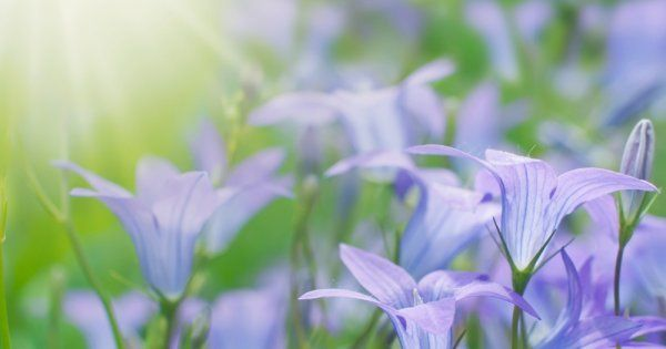 Цветы для балкона на солнечной стороне