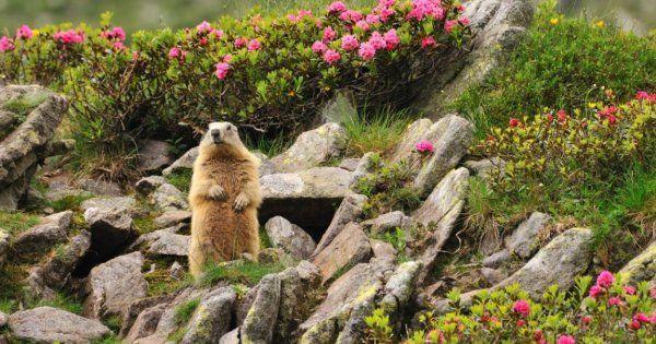 Альпийская горка с камнями на даче своими руками фото рокариев