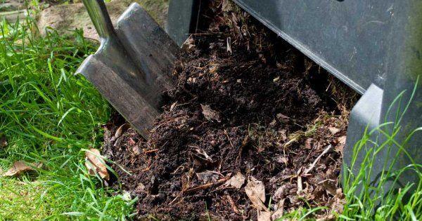 Подкормка огурцов навозом в открытом грунте: как развести и как удобрять