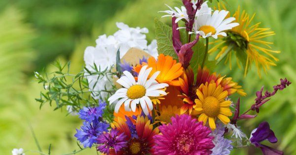 Цветы на срезку в теплице
