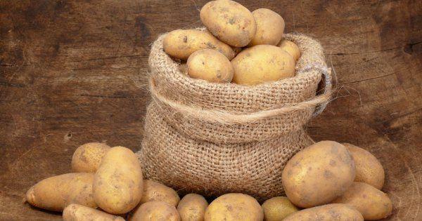 Почему картофель зеленеет в погребе
