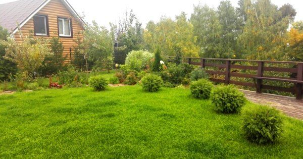 Оформление газона цветами