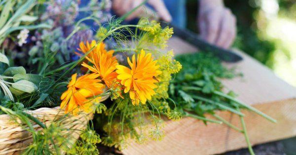 Пряные цветы – как использовать в кулинарии