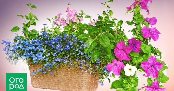 <b>Сад</b> и огород | Подборка статей | (Огород.ru)