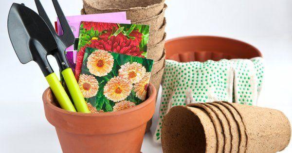 Как вырастить рассаду цветов