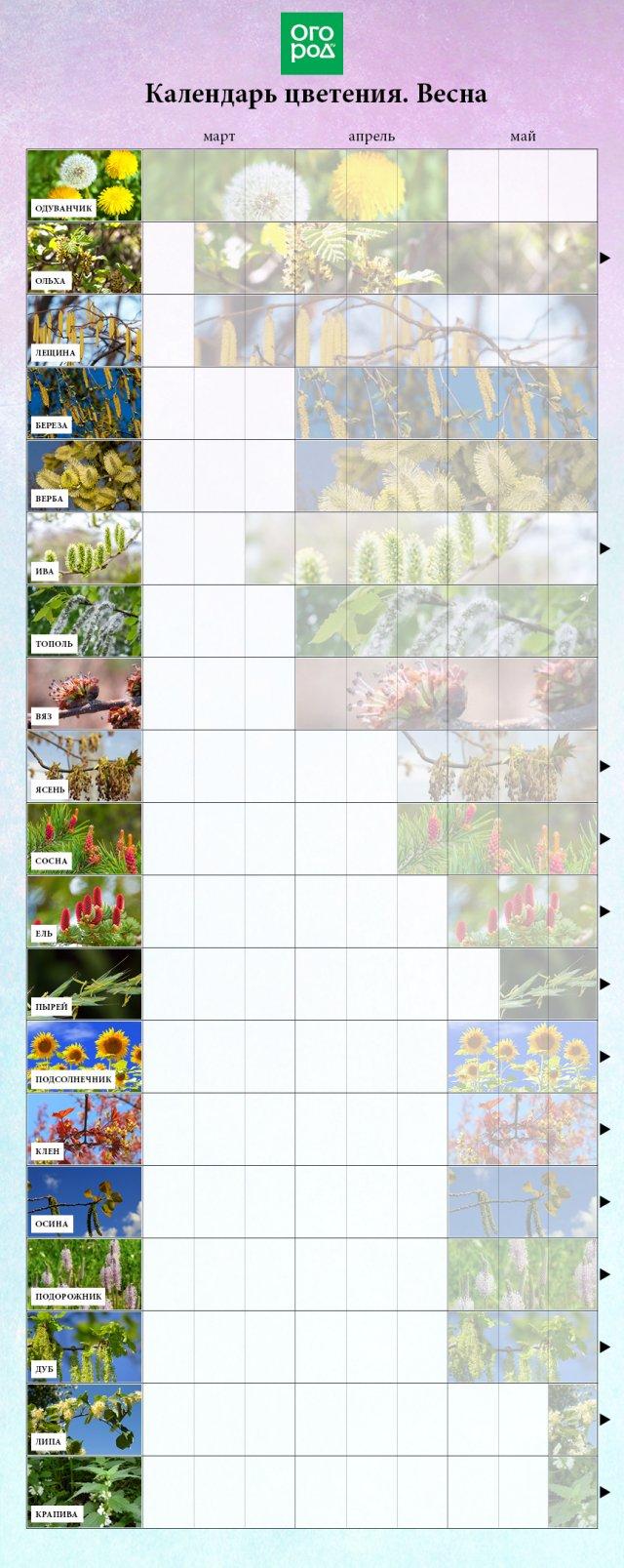 Сезонность цветов по месяцам
