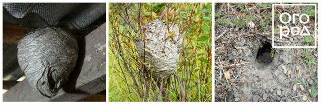 Коллаж - Осиные гнезда