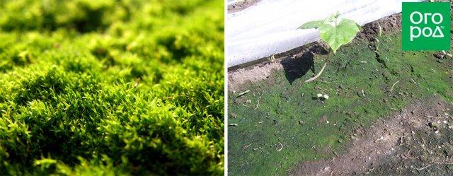 Мох и водоросли
