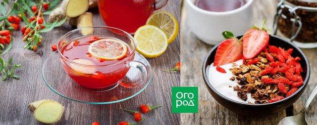 ягоды годжи польза вред противопоказания посадка уход