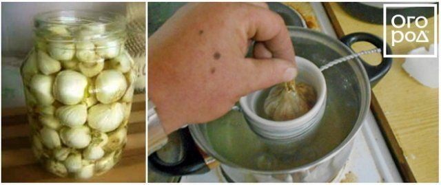 Головка чеснока в масле и парафине