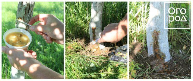Коллаж - замазка ран садовым варом