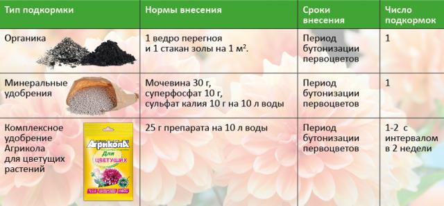 Чем подкормить цветы в саду весной