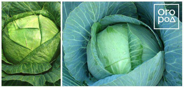 Рецепты для засолки капусты на зиму