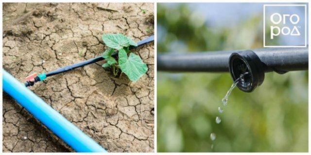 Капельная система полива растений