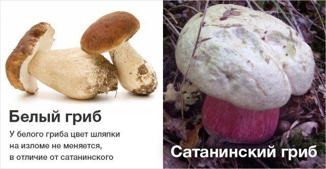 Увидишь белый гриб
