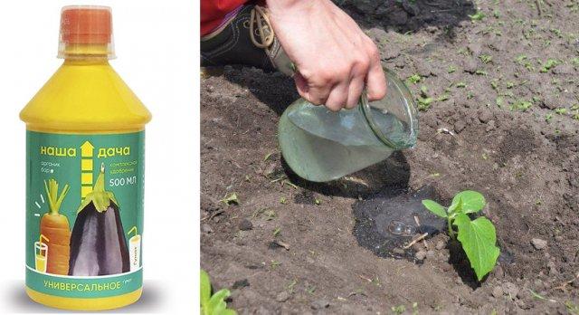 когда и как правильно сажать в грунт рассаду огурцов