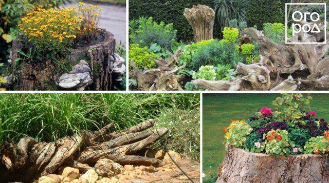 рутарий, клумба, цветы, сад