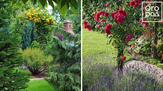 солитер, клумба, цветы, сад