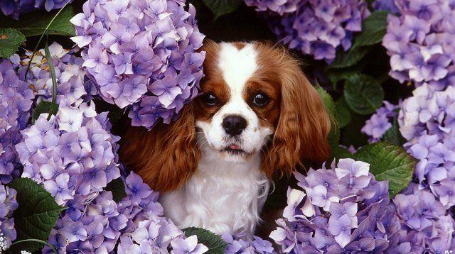 Породы собак для вольера