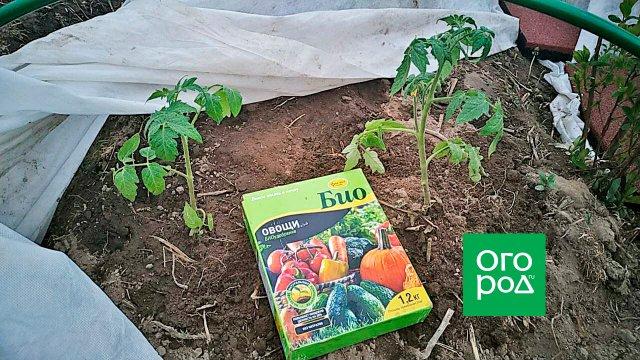 Биоудобрение для огорода