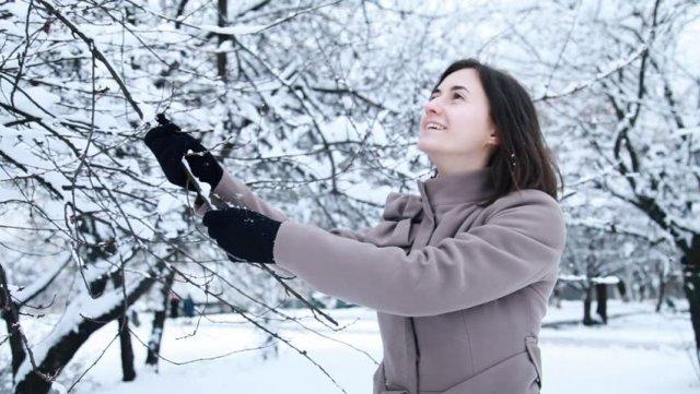 Отряхивание снега с дерева