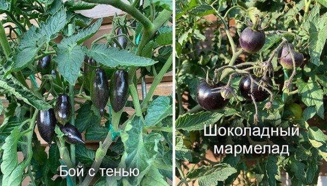 Фото Ларисы Новиковой