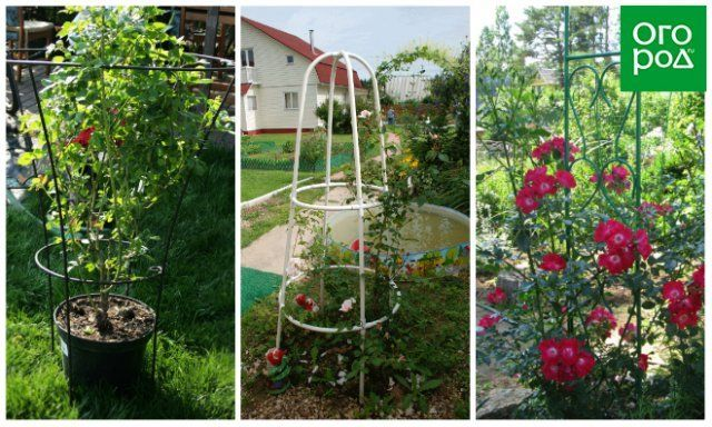Опоры для роз