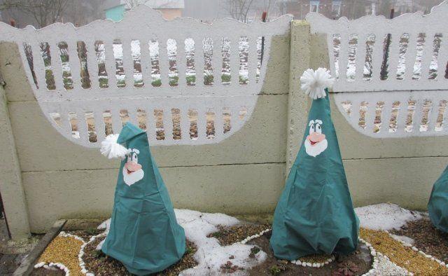 Укрытые на зиму кустарники