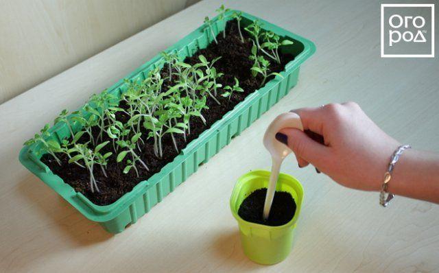 Подготовка грунта для сеянца